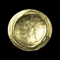 Edler, matt goldfarbener Metallknopf